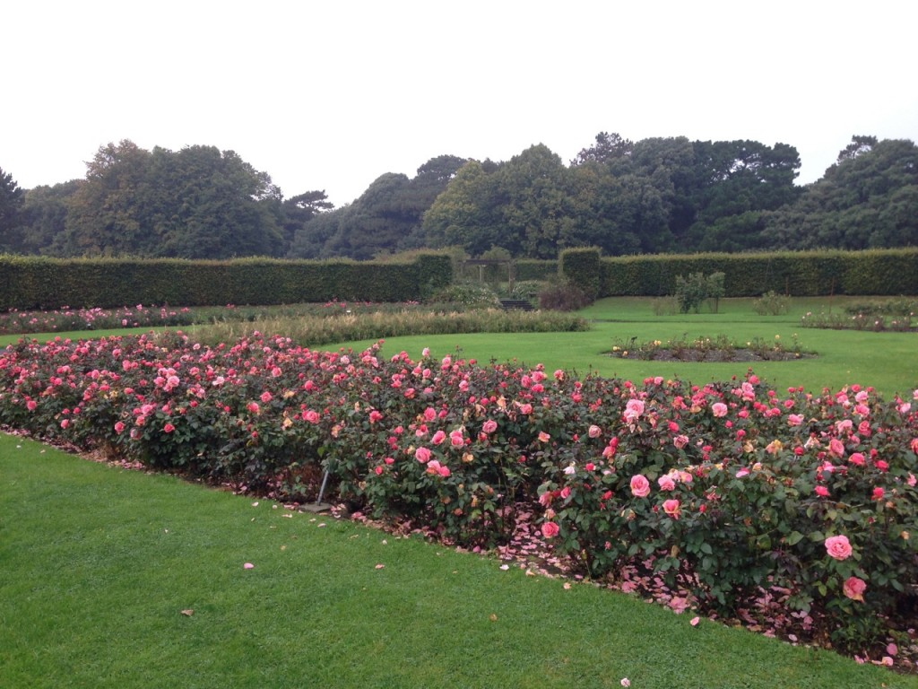 Rose Garden, St. Anne's Park (Photo by
