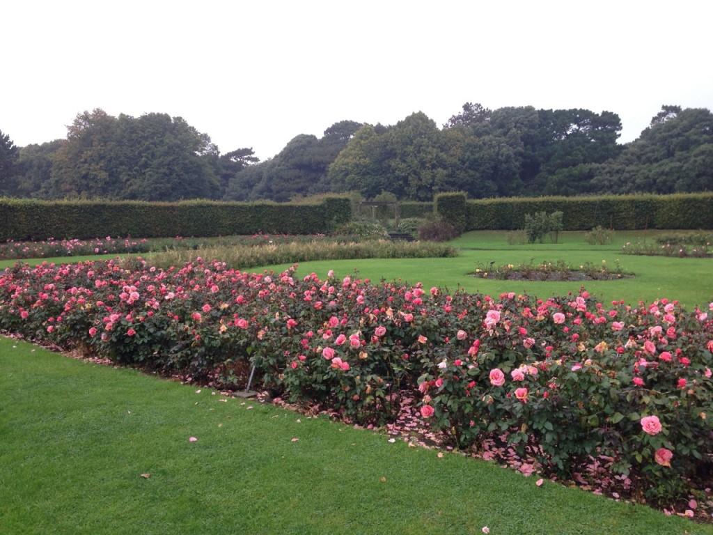 Rose Garden, St. Anne's Park (Photo by