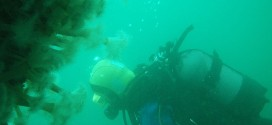 What you can expect to see while scuba diving in Ireland